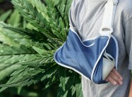 Can Marijuana heal Broken Bones?