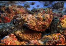 Great Barrier Reef Endangered:  Ocean turning Acidic from our Our Coal, Oil, Gas emissions