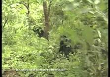 Trump's Behavior like Male Chimp Dominance Ritual: Jane Goodall