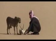 Saudi Arabian hunter stalks desert Gazelle with pet Cheetah