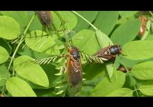 With 75% fall in flying Insects, Call for pesticide ban