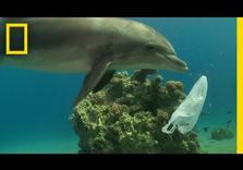 Oil Giants' $180 Bn Binge on Plastics to *Permanently* Pollute Oceans