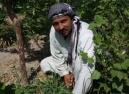 48hillsafghanistan