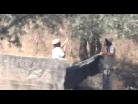 Israeli Squatters Busted Stealing Olives from Palestinian Farm