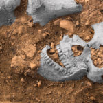 Medieval Crusaders in Levant Married, Recruited Locals, DNA shows