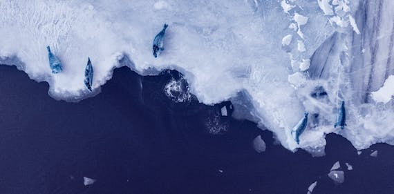 If Global Heating Exceeds 3.6° F., Antarctica's Melt could Raise Seas 60 Feet over Time