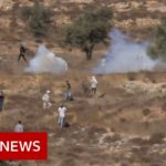 Israelis have Destroyed 1 mn Palestinian Olive Trees; this Month, they're at it Again
